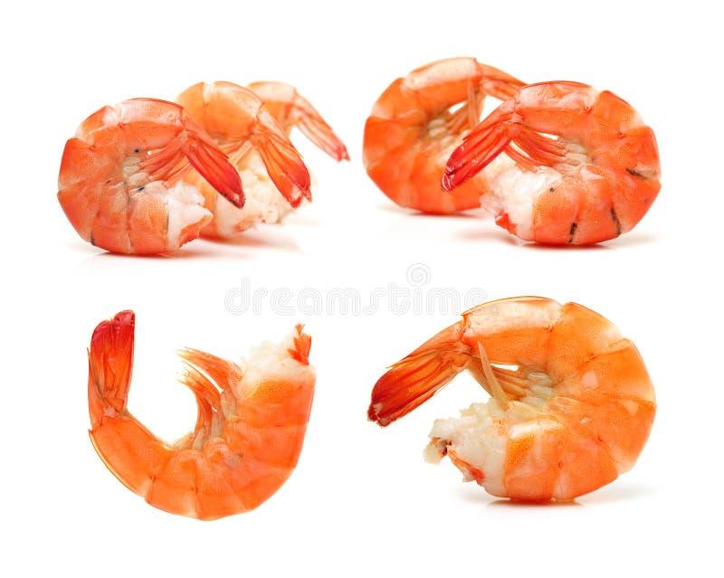 Kookten de garnalen Voorbereide Garnalengarnaal Geïsoleerde Zeevruchten Jumbogarnalen stock afbeelding