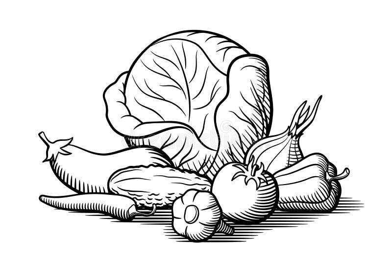 Kool, aubergine, tomaat, ui, knoflook, Spaanse peperpeper, paprika en komkommer royalty-vrije illustratie