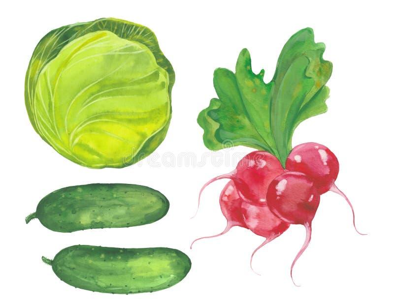 Kool, komkommer en radijs stock illustratie