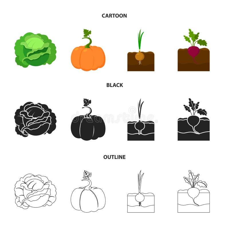 Kool, pompoen, ui, buriak Pictogrammen van de installatie de vastgestelde inzameling in beeldverhaal, zwarte, vector het symboolv stock illustratie