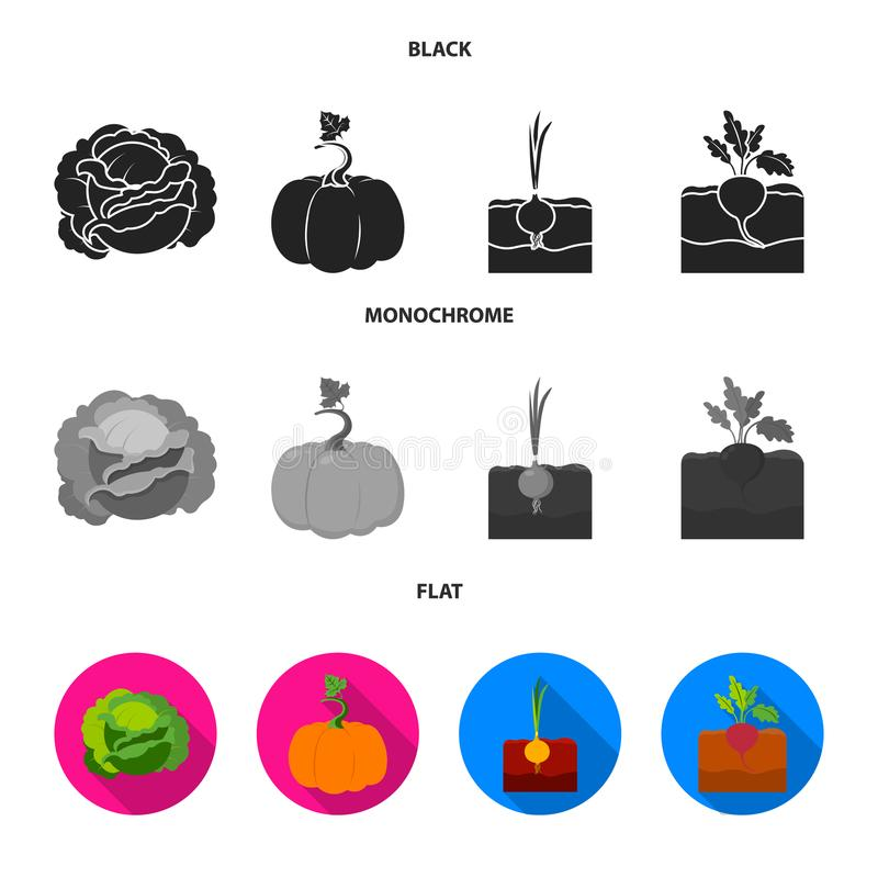Kool, pompoen, ui, buriak Pictogrammen van de installatie de vastgestelde inzameling in de zwarte, vlakke, zwart-wit voorraad van royalty-vrije illustratie