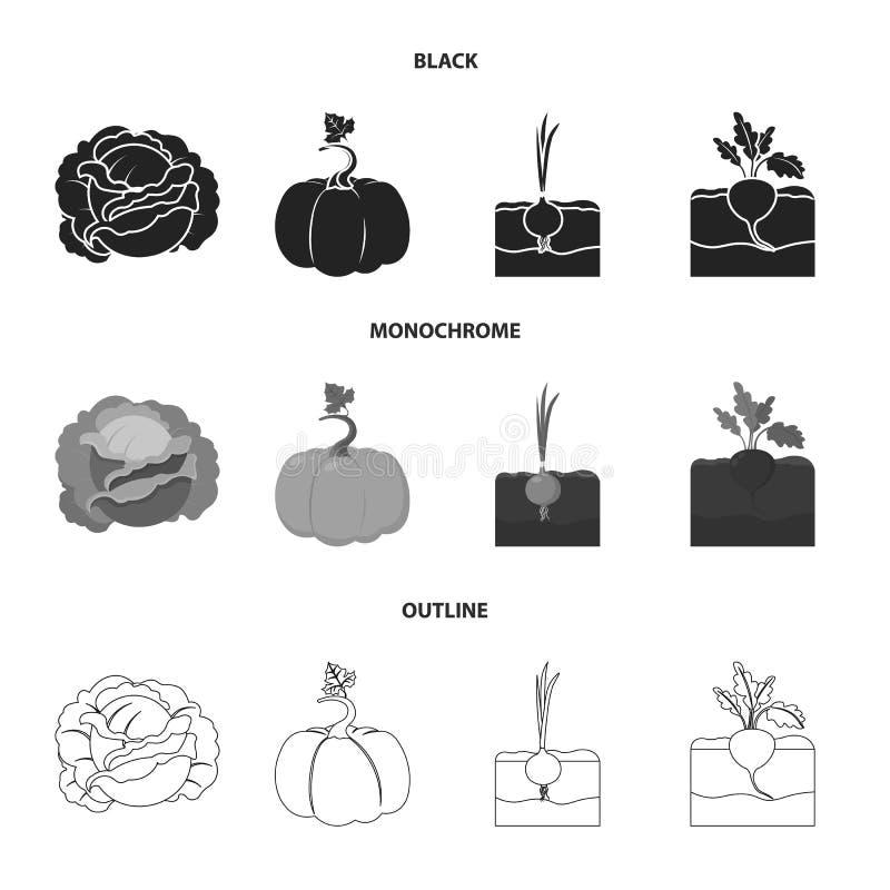 Kool, pompoen, ui, buriak Pictogrammen van de installatie de vastgestelde inzameling in zwarte, zwart-wit, vector het symboolvoor stock illustratie