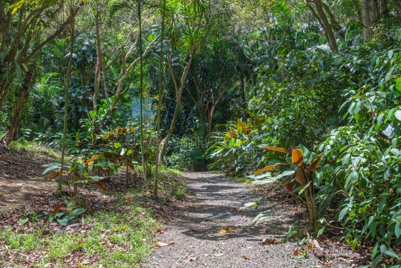 Koolaus的夏威夷雨林 库存照片