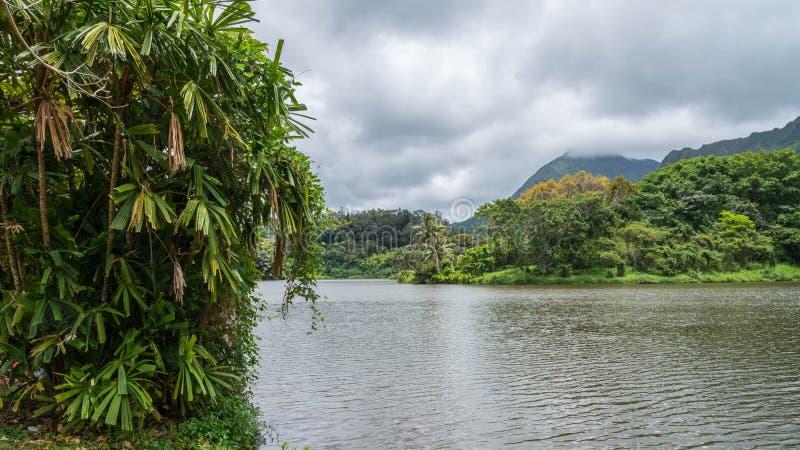 Koolaus的夏威夷雨林 图库摄影