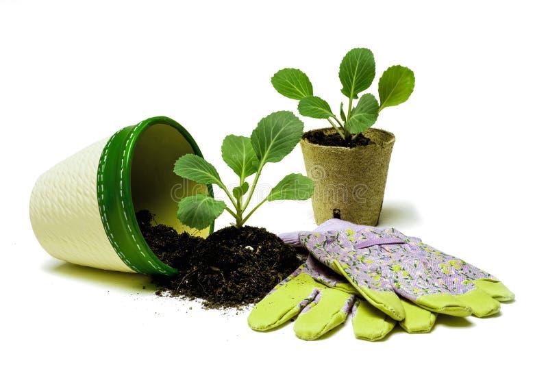 Kooljonge planten Klaar voor het Planten royalty-vrije stock foto's