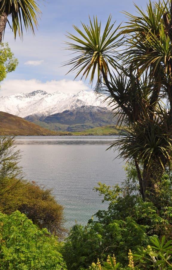 Koolpalmen - Symbool van de Reis van Nieuw Zeeland stock fotografie