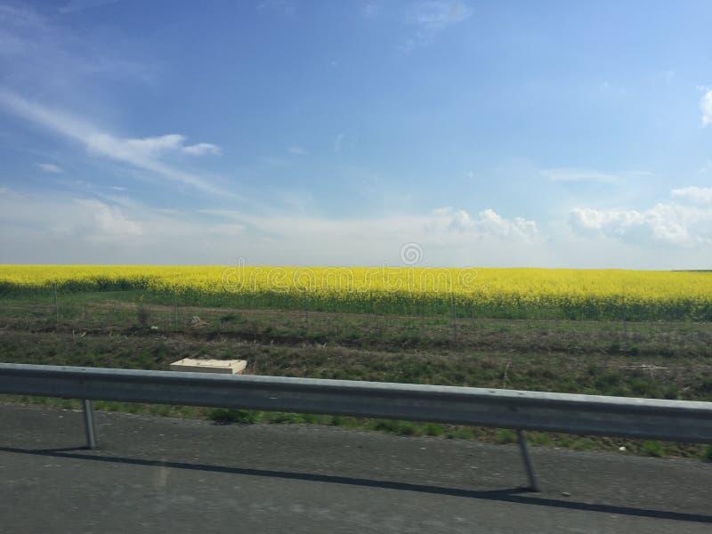 Koolzaad, Canola, Biodieselgewas royalty-vrije stock foto's
