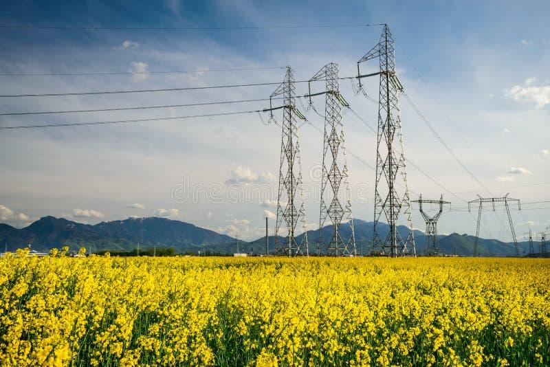 Koolzaadgebied en powerline elektriciteit stock fotografie