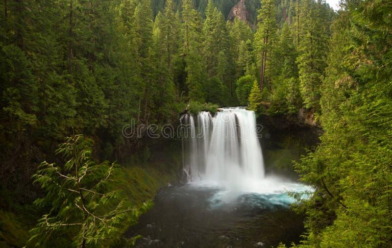 Koosah cai no rio de McKenzie, Oregon, EUA fotografia de stock royalty free