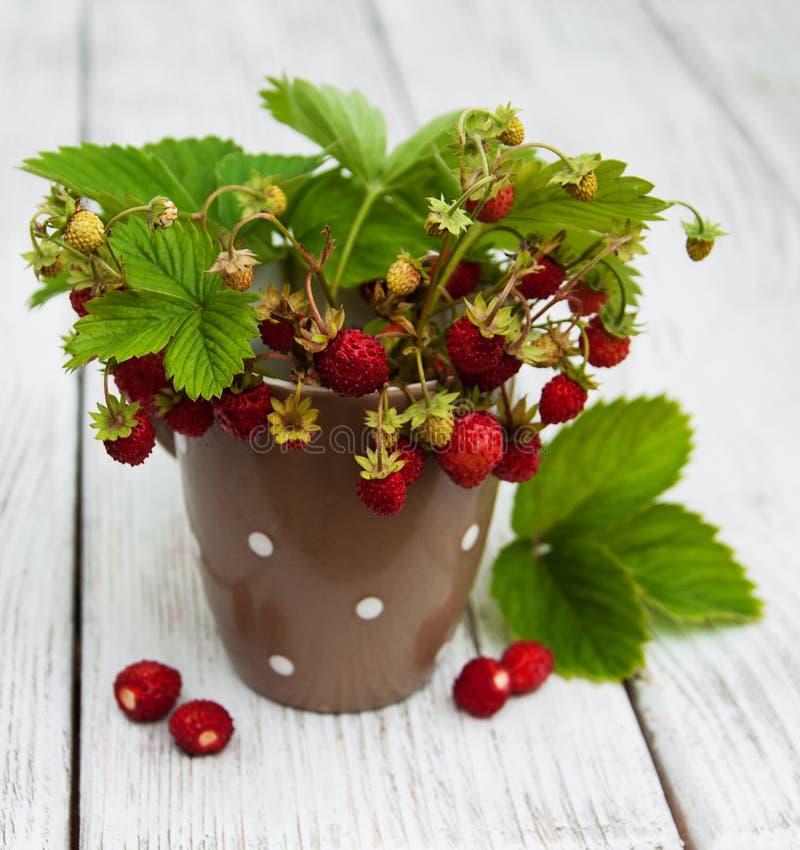 Kop met wilde aardbeien royalty-vrije stock fotografie
