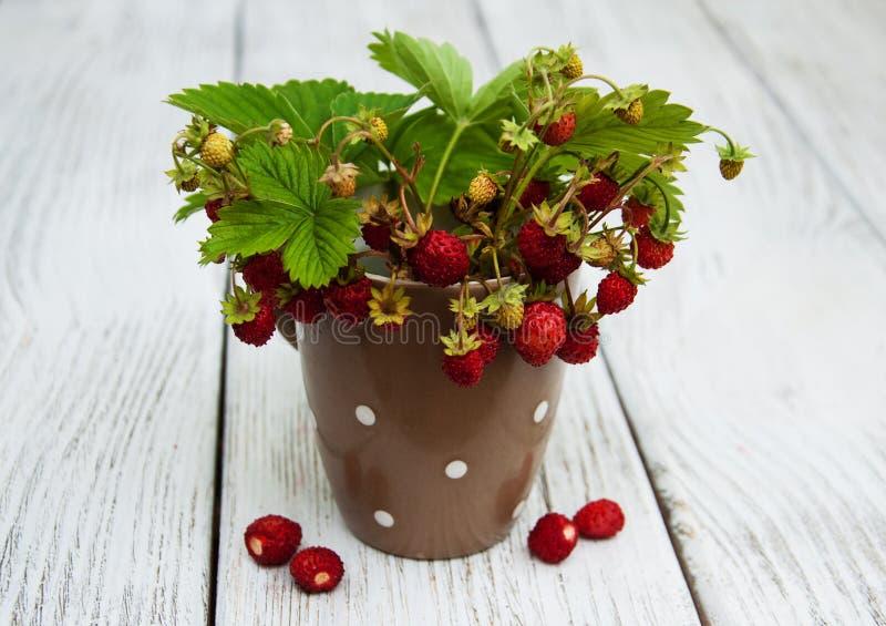 Kop met wilde aardbeien stock fotografie