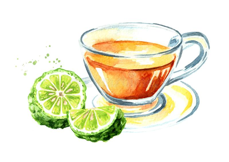 Kop thee met bergamotfruit Waterverfhand getrokken die illustratie, op witte achtergrond wordt ge?soleerd royalty-vrije stock foto's