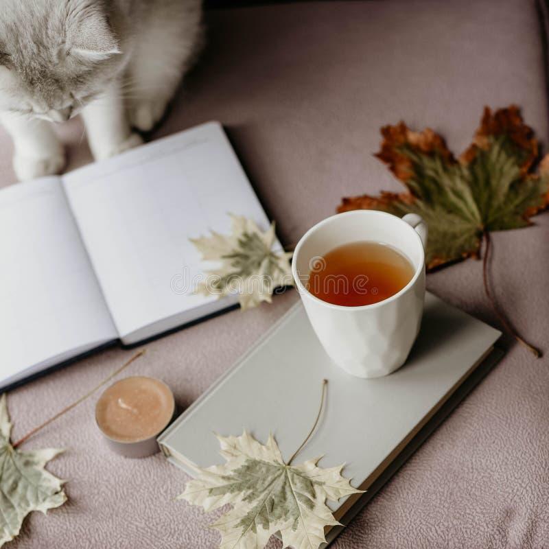 Kop thee met een boek in het binnenland met de herfstblad, noteboo stock afbeeldingen