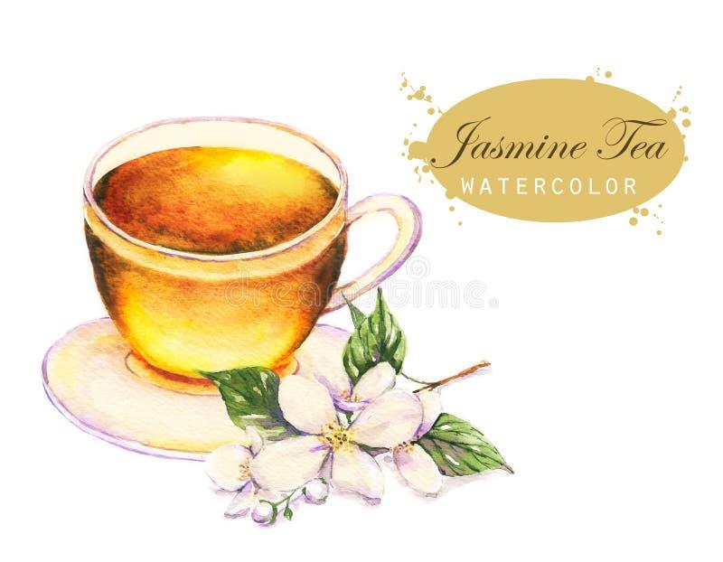 Kop van de jasmijnthee en de jasmijntak op de witte achtergrond wordt geïsoleerd die stock illustratie