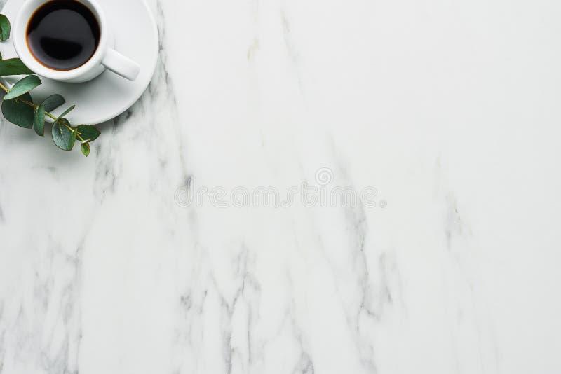 Kop van koffie met eucalyptus stock afbeeldingen