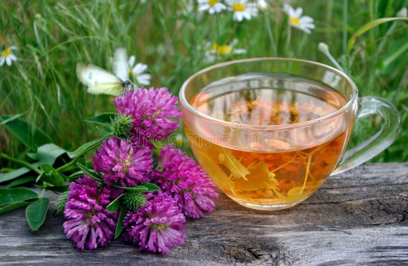Kop van lindethee op een houten lijst witte vlinderzitting op een kop van aftreksel klaverbloemen en een kop van bloemthee Herba stock afbeelding