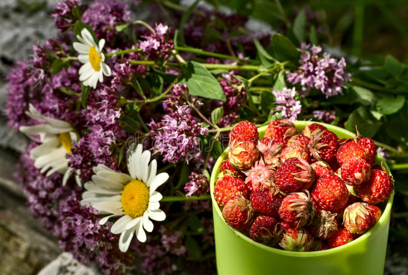 Kop wilde aardbeien en kruiden stock afbeelding
