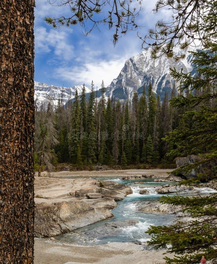 Kopanie Końska rzeka w Yoho parku narodowym, kolumbia brytyjska, Kanada obrazy stock