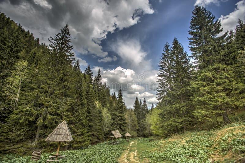 Kopaonikberg in Servië stock afbeelding