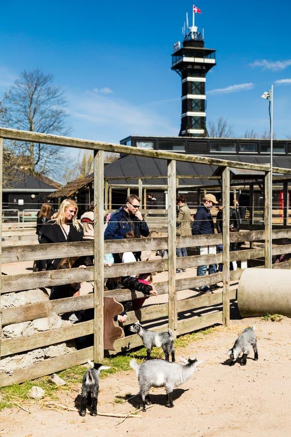 Kopenhaga Zoologiczny ogród zdjęcia royalty free