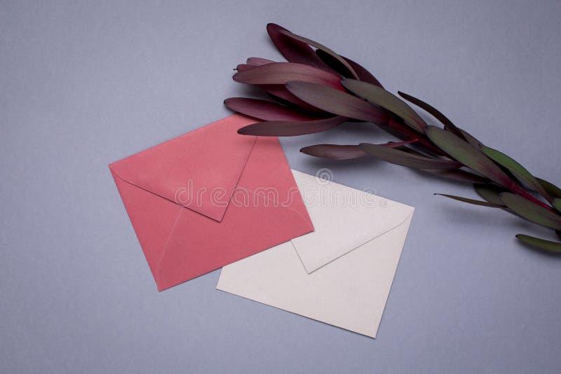 Koperty Burgundy kwiat na szarym tle i kolor zdjęcie stock