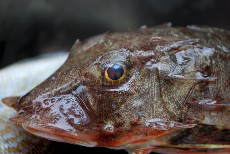 Kopf der Fische stockfotos