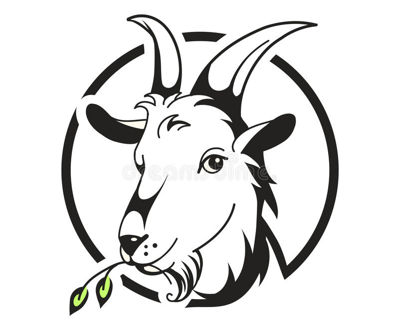 Kopf der Ziege auf weißem Hintergrund lizenzfreie abbildung