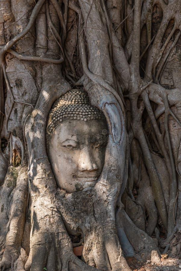 Kopf des Buddha-Bildes an der Wurzel des pipal Baums bei Wat Mahathat in Ayutthaya, Thailand lizenzfreie stockbilder