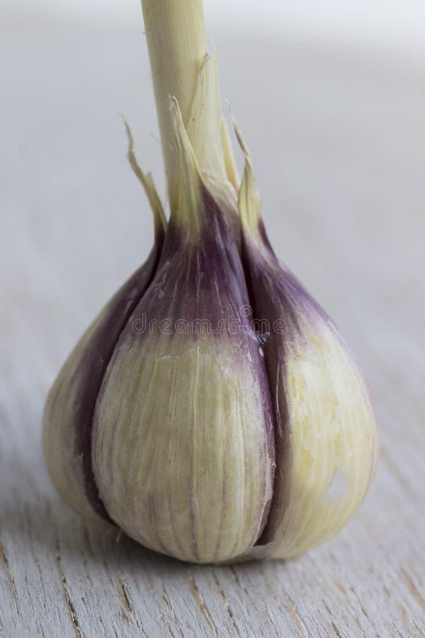 Kopf des Knoblauchs auf Nahrungsmittelhintergrundnahaufnahme stockbilder