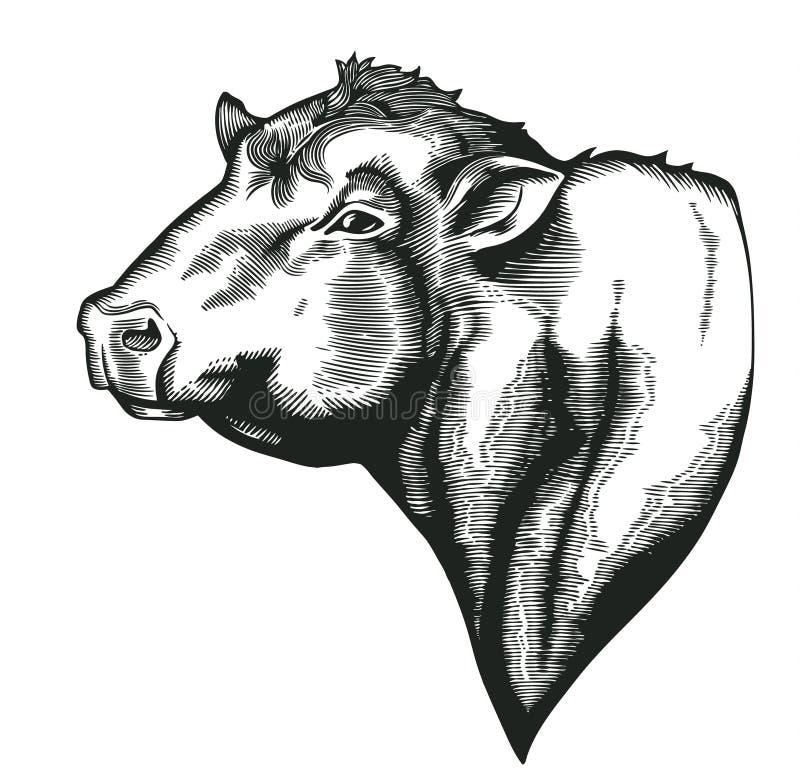 Kopf des Stiers von dangus Zucht gezeichnet in Weinleseholzschnittart Vieh lokalisiert auf weißem Hintergrund Vektor stock abbildung