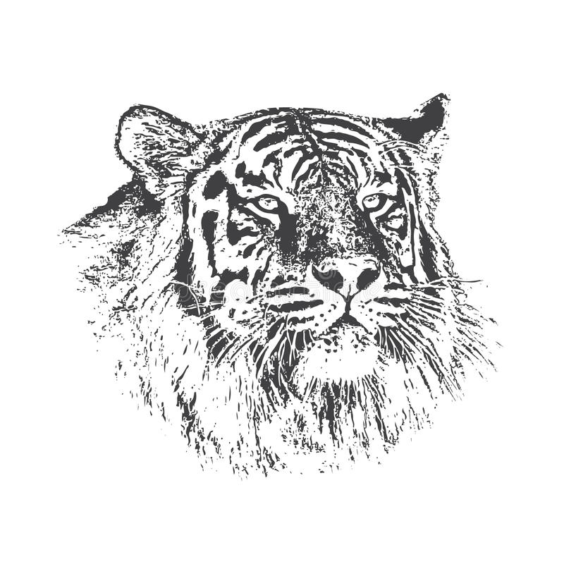 Kopf des Tigers lizenzfreie abbildung