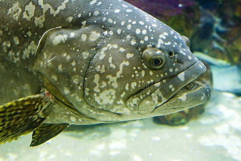 Kopf eines Fisches stockbilder