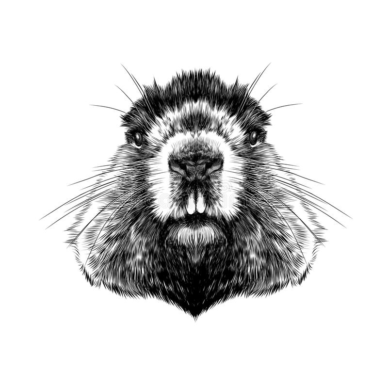 Kopf Groundhog lizenzfreie abbildung