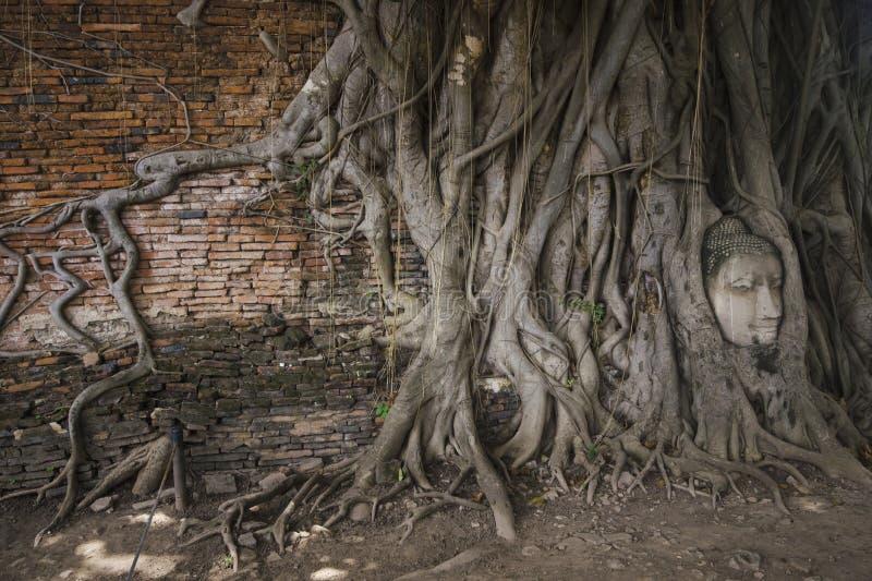 Kopf von Buddha in einem Baum in Ayutthaya stockbilder