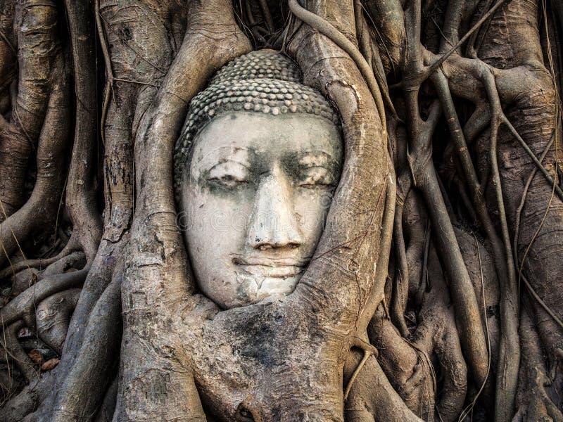 Kopf von Buddha-Statue in den Baum-Wurzeln, Ayutthaya, Thailand stockbild