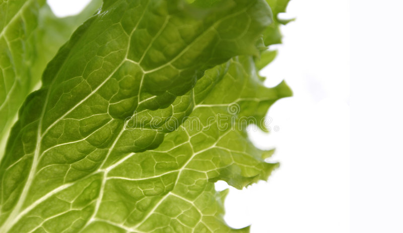 Kopfsalat auf Weiß lizenzfreies stockfoto