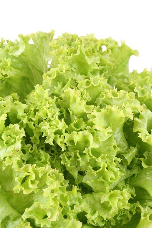 Kopfsalat - lollo bindo stockbild