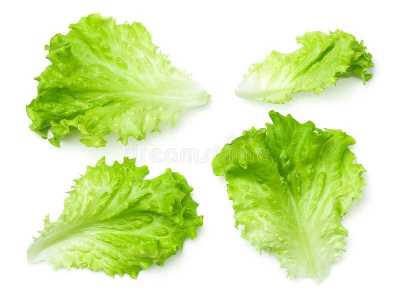 Kopfsalat-Salat-Blätter lokalisiert auf weißem Hintergrund lizenzfreie stockfotografie