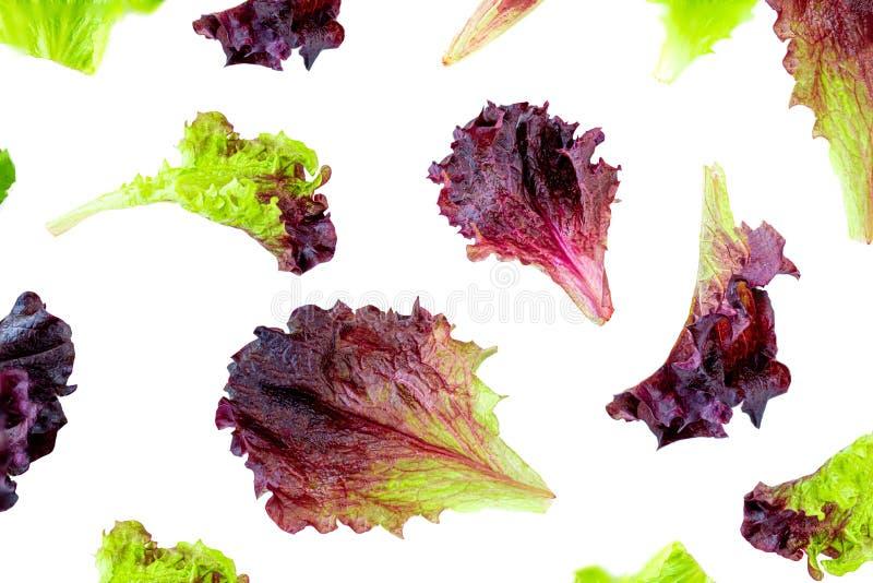 Kopfsalatblätter kopieren Frischer Kopfsalat getrennt auf wei?em Hintergrund Batavia-Salat Beschneidungspfad eingeschlossen Gesun stockbilder