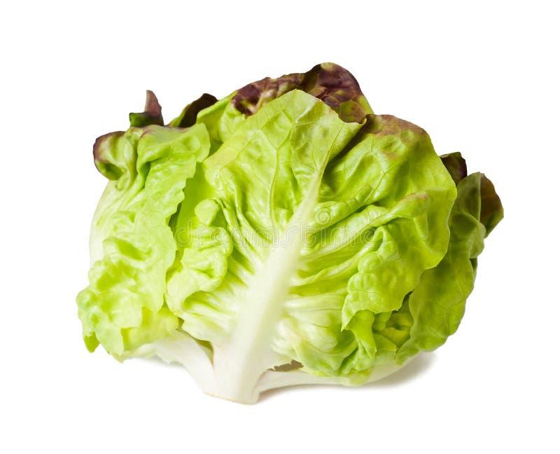 Download Kopfsalatsalat stockbild. Bild von gemüse, vegan, blätter - 27728897