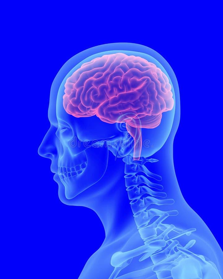 Kopfschmerzenröntgenstrahlscan des menschlichen Körpers mit sichtbarem Gehirn vektor abbildung