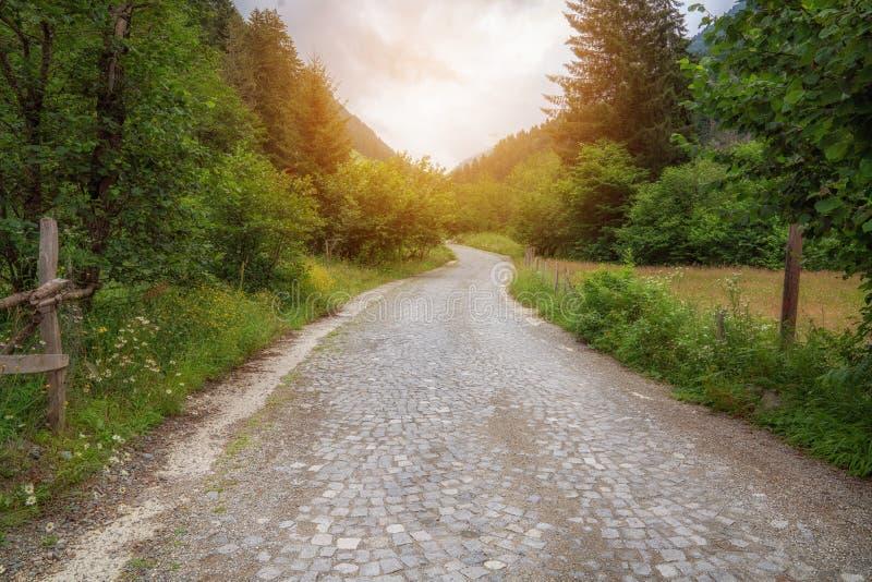 Kopfsteinwegweise herein zum Park im Wald lizenzfreie stockfotos