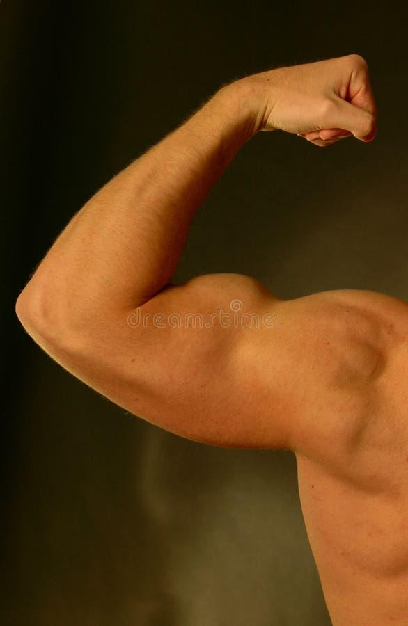 kopia biceps wykonana szczyt zdjęcia royalty free