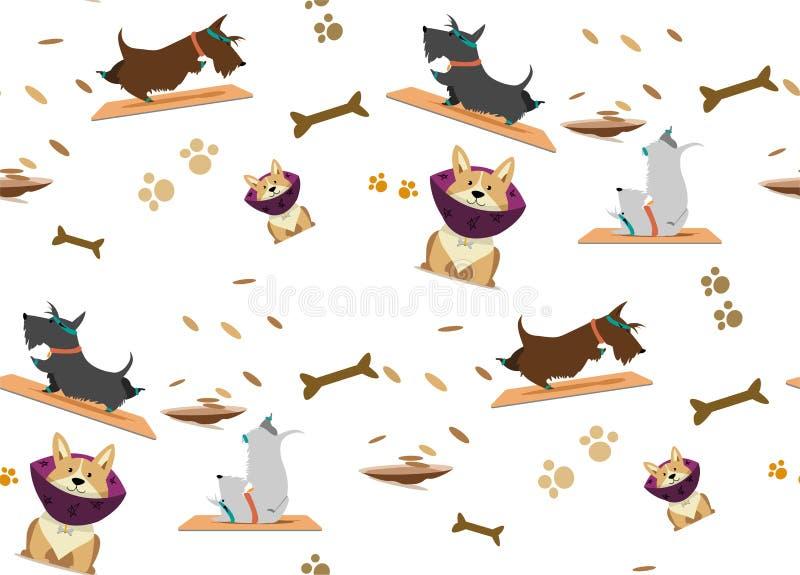 Kopieren Sie schottischen Terrier und den Corgi, die Yoga Yogahaltungen tut stockbild