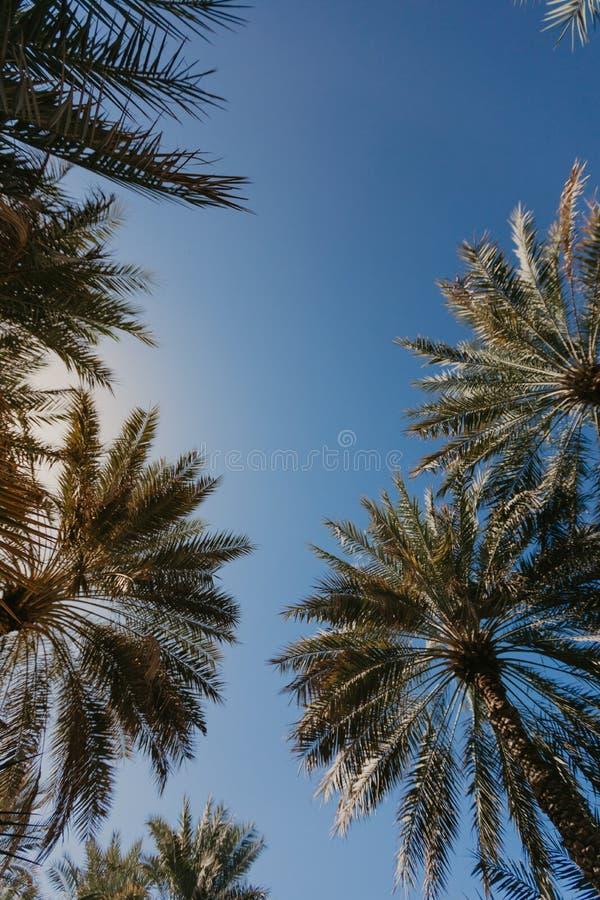 Kopieringsutrymme av den tropiska palmträdet för kontur med solljus - bild royaltyfri fotografi