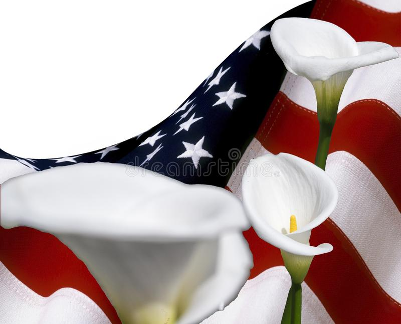 Kopieringsutrymme med USA sjunker, och callalilyumen blommar, för grafiskt begrepp arkivfoton