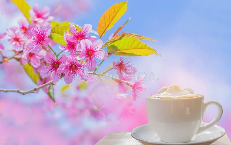 Kopp av lattekaffe med den mjuka suddiga lösa himalayan körsbäret, körsbärsröd blomma, Sakura fower av Thailand med strålljuset royaltyfri bild