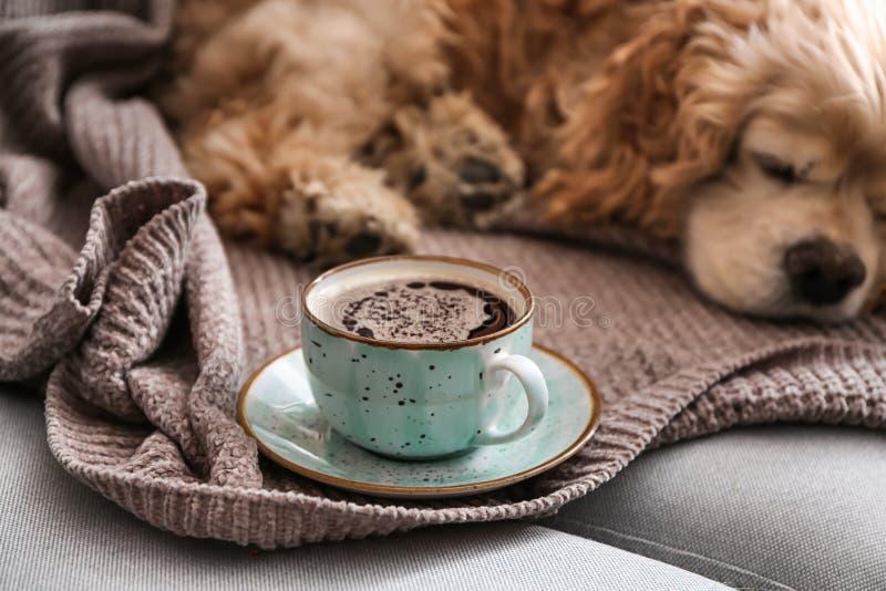 Kopp av smakligt aromatiskt kaffe och den gulliga sova hunden på soffan arkivbild