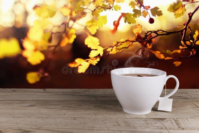 Kopp av varmt te royaltyfria bilder