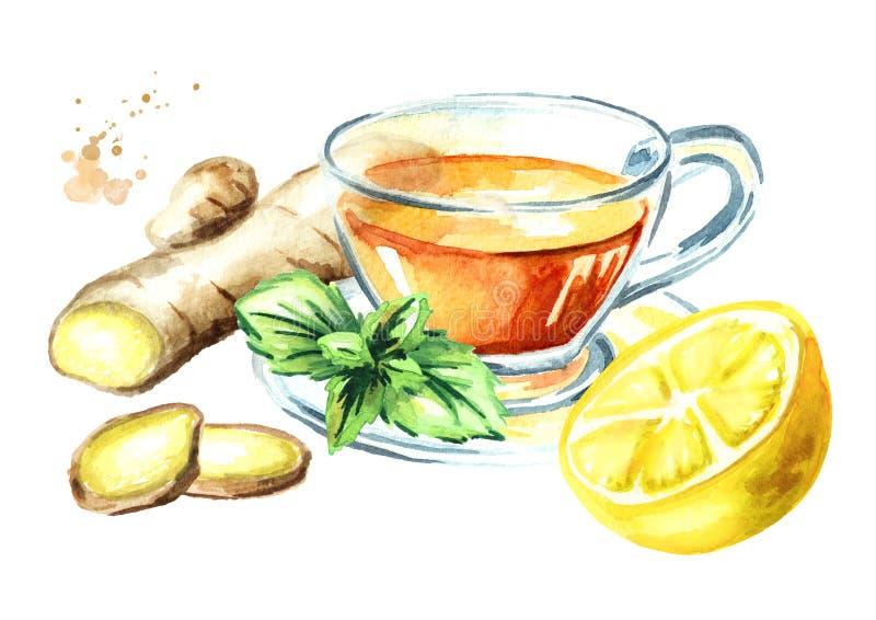 Kopp av varmt te med ingefäran, citronen och mintkaramellen som isoleras på en vit bakgrund stock illustrationer